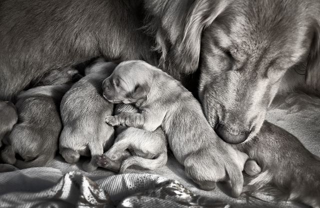 Do Mother Dogs Remember Their Puppies