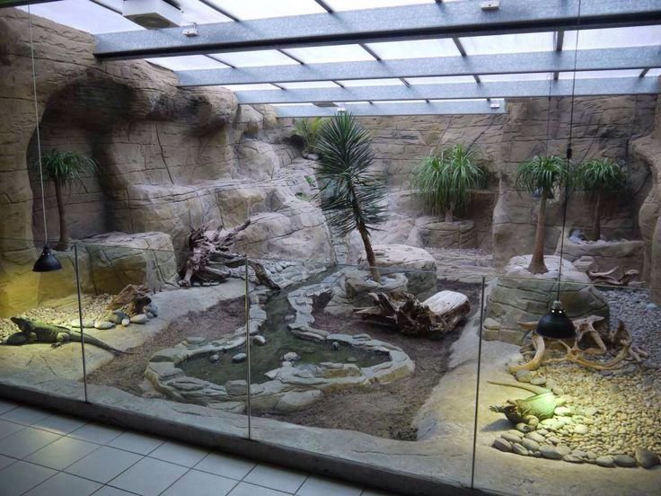 Hey hubby - build me this. No one should let a good basement go to - 26 Best Iguana Habitats Images On Pinterest Reptile Cage