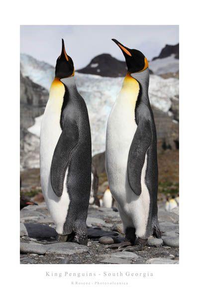 Top Penguin Posters