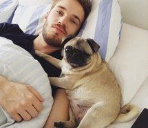 adorable, bedroom, cute, maya, morning, pet, pewdiepie, pug, selfie, youtuber, felix kjellberg