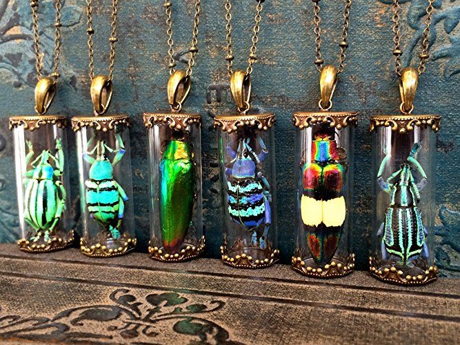 Image result for Real insect jewelry Glass terrarium necklace Taxidermy jewelry Jewel Beetle pendant Real Bug jewelry Science jewelry Entomology Strange gifts https://www.amazon.com/dp/B01F0L615Q/ref=cm_sw_r_cp_api_yHztAb0JNWRJV
