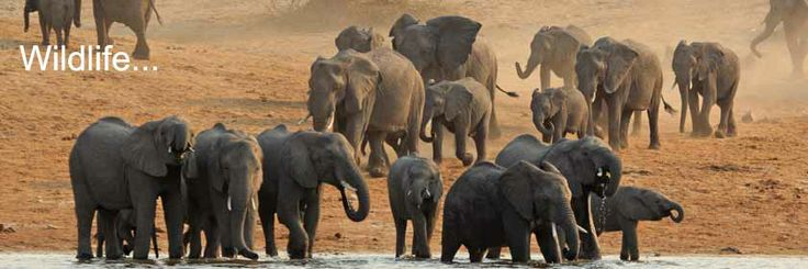 Elephants Without Borders: EWB is based in Kazungula, Botswana's border town where the boundaries of Botswana, Namibia, Zambia and Zimbabwe meet along the Zambezi River.