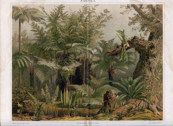 Ferns Staghorn Bird's Nest Maidenhair Tree Fern late 1800s Antique Colorful German Chromolithograph