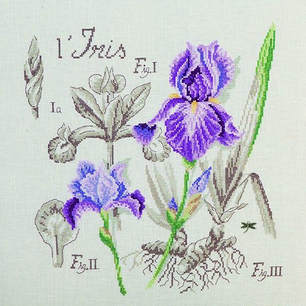 Lin : Étude à l'Iris (maxi-grille) à broder au point de croix