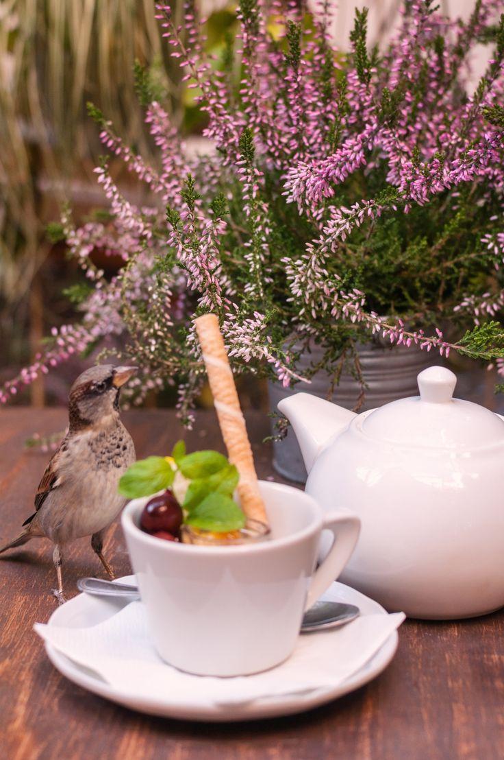 #tea #bird #garden #afternoon #summer #sweet