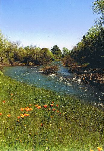 Little Chico Creek with California Poppies, Chico, Ca.