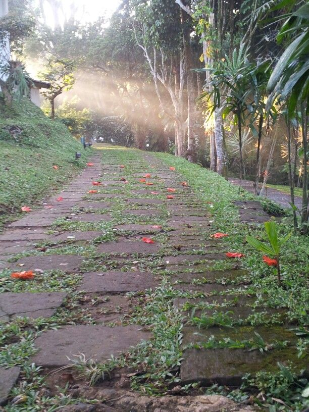 a path in the morning