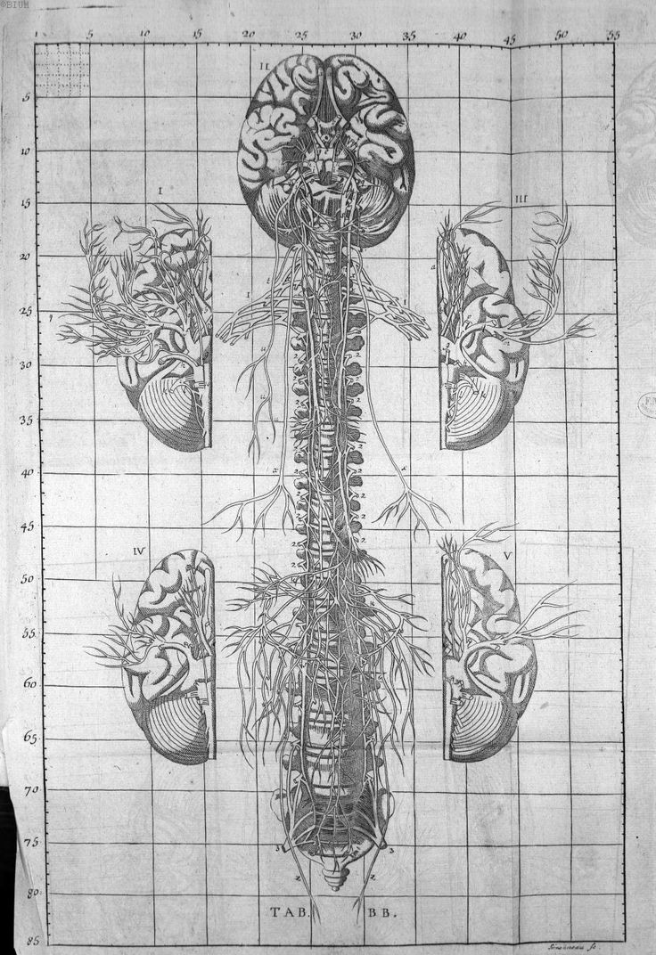 49 best Anatomie images on Pinterest   Human anatomy, Anatomy art ...