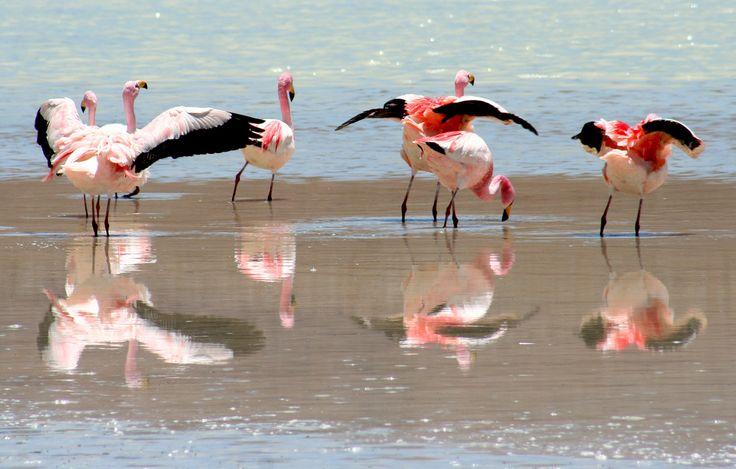 20071104 Flamingos, Laguna Verde, Bolivia 001   Flickr - Photo Sharing!