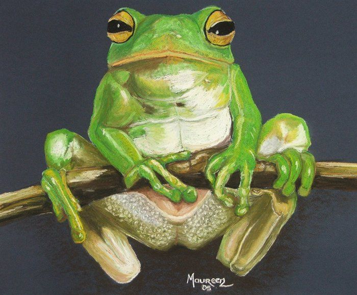 385 best How to Fish Frogs Etc images on Pinterest Watercolor - fresh coloring pages tree frog