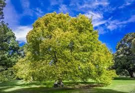 Image result for trees