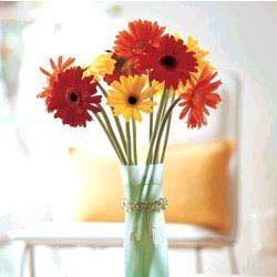 Gerbaras In Vase