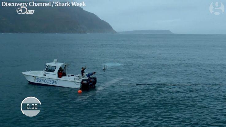 Michael Phelps carreras de un gran tiburón blanco fue una farsa