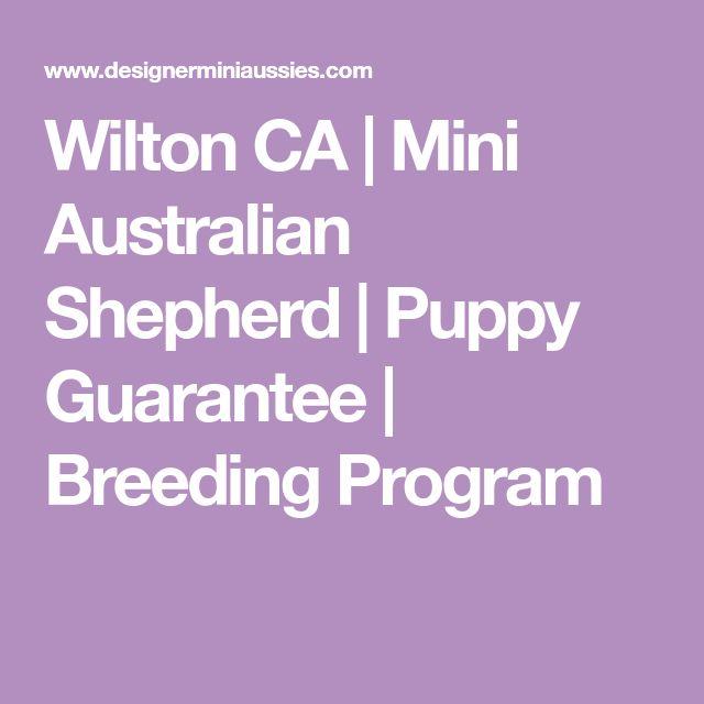 Wilton CA | Mini Australian Shepherd | Puppy Guarantee | Breeding Program