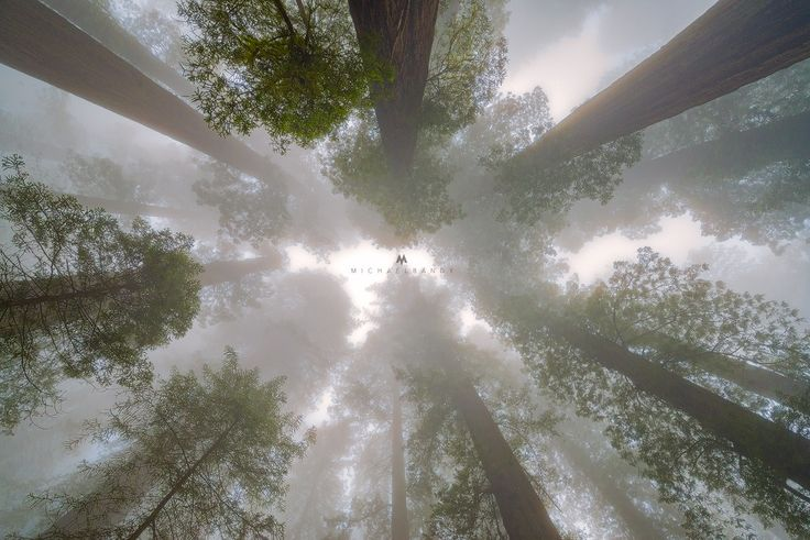 Mists of Del Norte - took this during our trip to the Del Norte Redwoods with Ryan Engstrom and Aron Cooperman. We had a blast and though we did not see many rhodies, we got some very thick and dense fog the evening we were there. Hope you all like this!