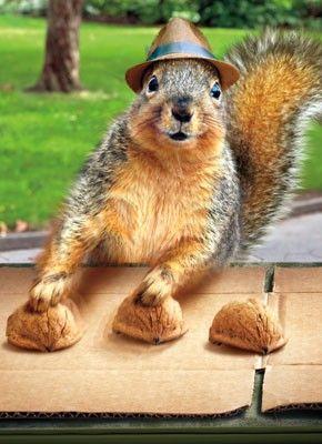 Pick a nut. Any nut . . .