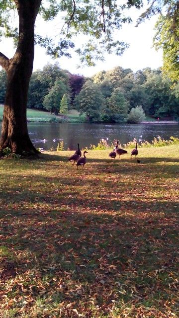 Park at University of Nottingham...UK