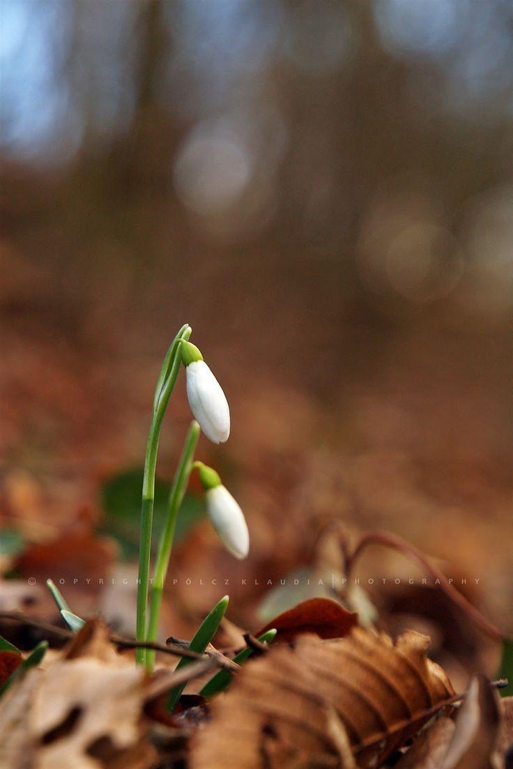 Pölcz Klaudia - kisklau Itt a tavasz!!!