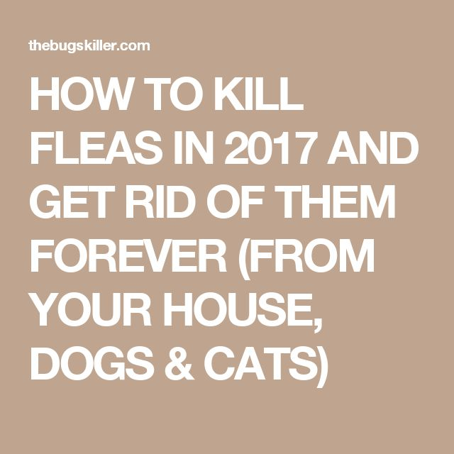 Best Way To Get Rid Of Cat And Dog Fleas