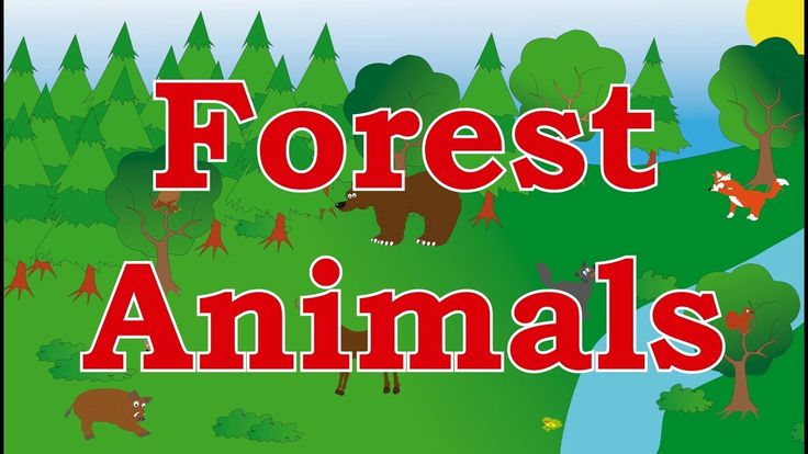 🐻Learn Forest Animals - Sounds for kids, children, babies and toddlers - Best Learning For Kids