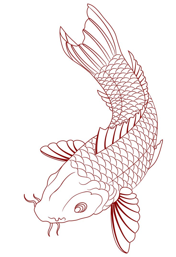 19 best japanese koi fish tattoo stencils images on for Japanese koi fish drawing