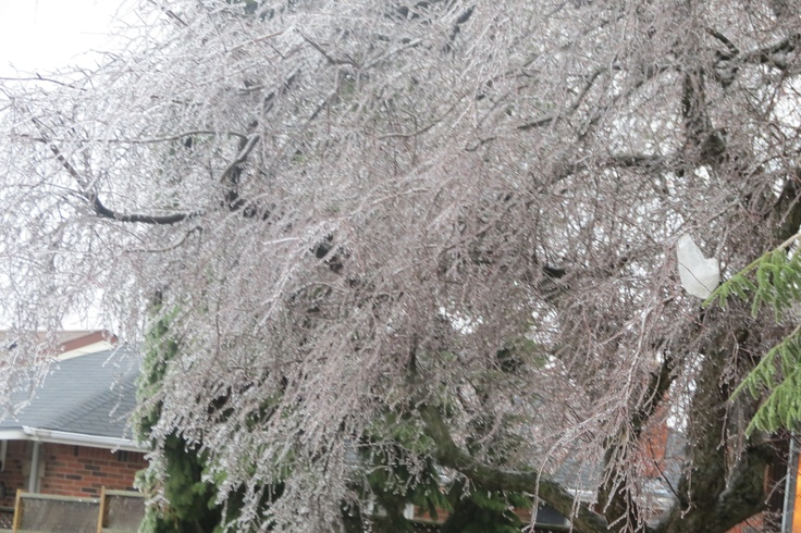 A tree covered in Ice
