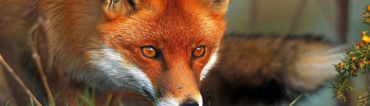 The Toxic Fox Show  A podcast for Conscious Business Owners and Entrepreneurs who give a Damn!