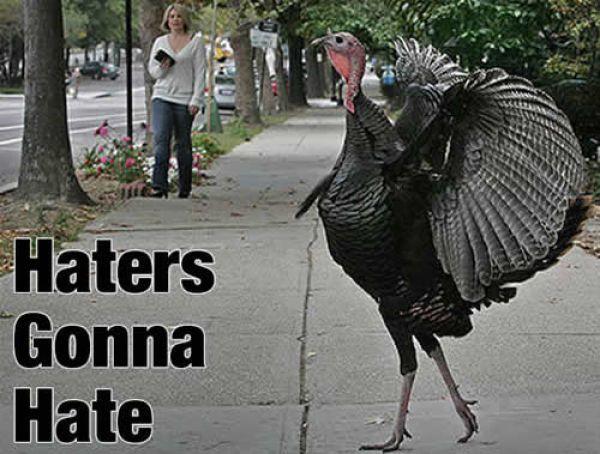 16 Funny Thanksgiving Memes