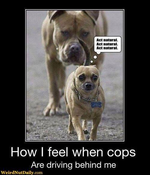 Congratulations funny dog - photo#36