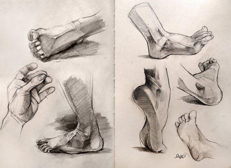 Anatomie pieds humain