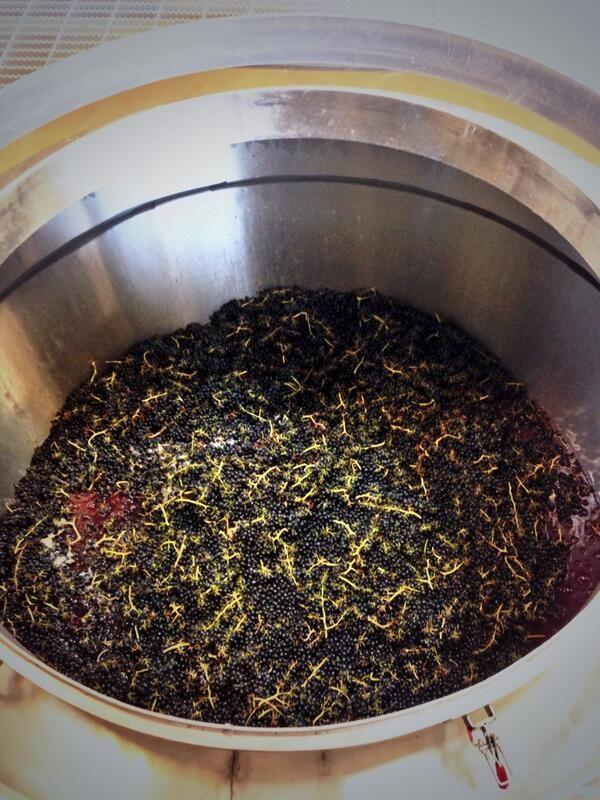 Columbia Crest Syrah fermentation #WAwine