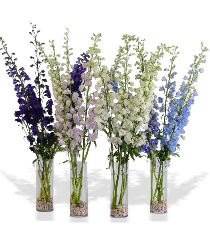 1000 images about delphinium arrangement espuela de for Flower arrangements with delphinium