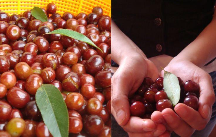 letras de sabores: Capulines: Los parientes pobres de las cerezas