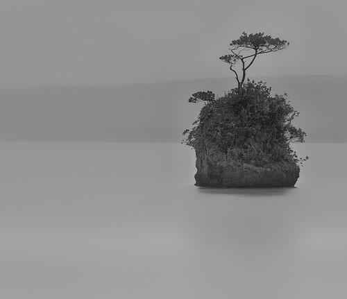 Lonesome Pine Tree