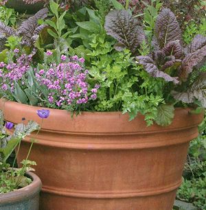 Container Gardening! Maximize small spaces by growing vegetables, herbs, and flowers in containers!