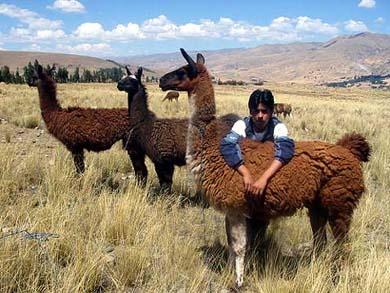 PERU LLAMA TREKS