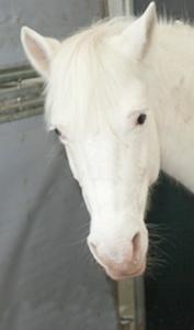 Doskonale skacze. Wymaga wyczucia i pewnej ręki przez co jest koniem wyłącznie dla doświadczonych jeźdźców. Odnosi sukcesy na wielu zawodach rangi ogólnopolskiej. Cavaliada grudzień 2012 – 5 miejsce w kategorii MIDI.