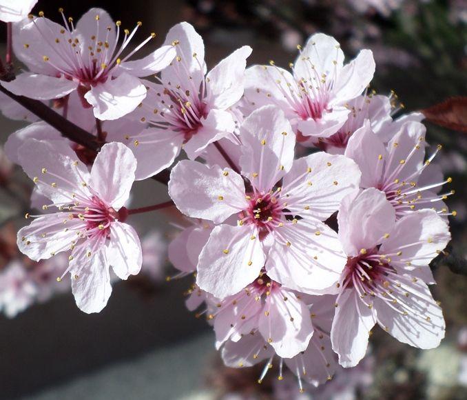 Tavasz van!