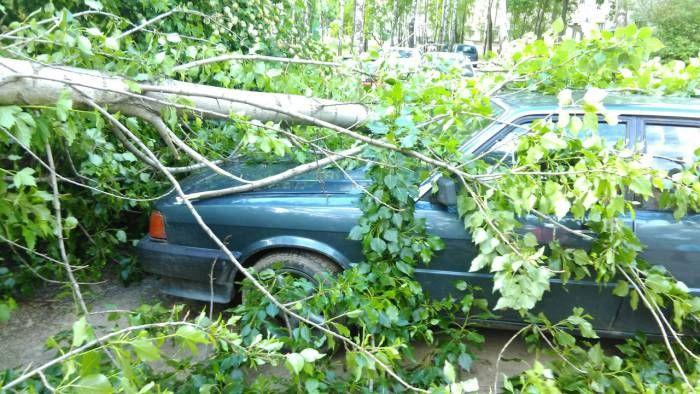Несмотря на то, что Витебское областное управление МЧС разместило на своем сайте сообщение, что на регион надвигается грозовой фронт, апользователям МТС пришло СМС-предупреждение о сильном ветре и о возможности падения старых деревьев и ветхих строений, вВит
