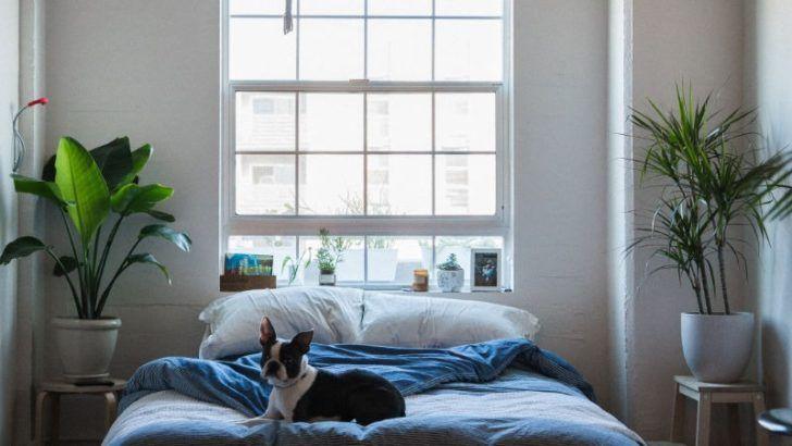 Pflanzen Im Schlafzimmer 14 Beste Pflanzen Fur Einen Gesunden Schlaf In 2020 Schlafzimmer Pflanzen Pflanzen Schlafzimmer