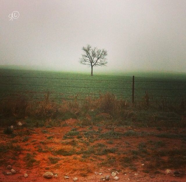 "The day I took this the fog was a perfect backdrop to make this otherwise unremarkable tree look amazing. Originally posted to my Instagram page (@shellibean1162) with the caption, ""Stand alone if you must, but stand"""