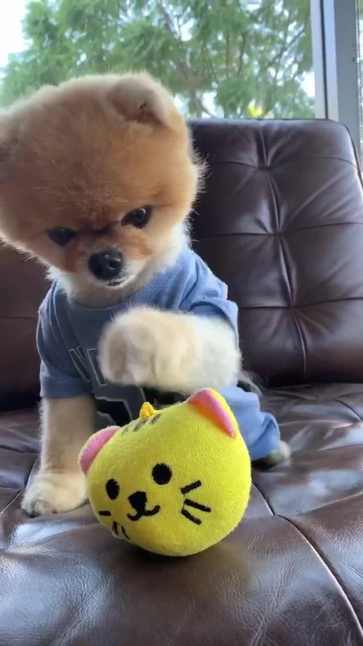 Download Tiktok To Watch More Funny Videos Of Cuties Puppy