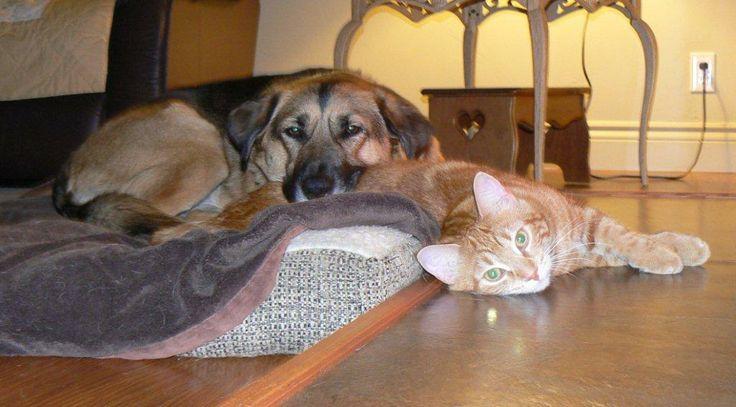 Winnie using Miss Kitty as a pillow. Miss Kitty doesn't mind.