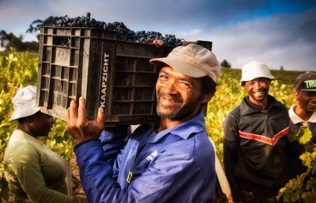 Kaapzicht Wine Estate - Follow The Feast - Rewined Wine Marketing Agency