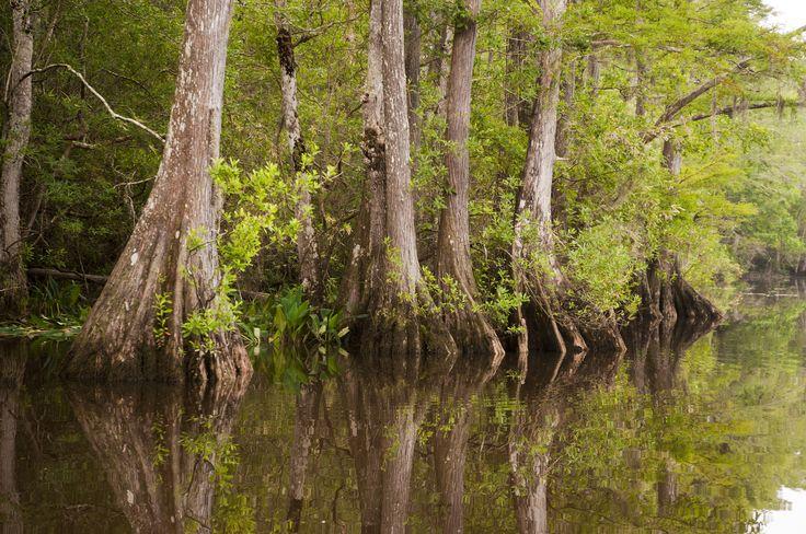 cypress creek lakes fishing southern