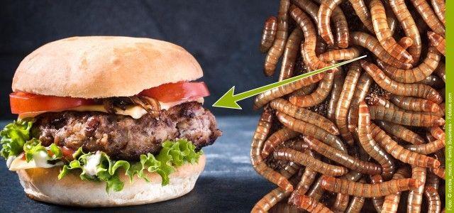 Dank einer Gesetzesänderung sind in der Schweiz jetzt drei Insektenarten offiziell als Lebensmittel zugelassen. Was haltet ihr davon?