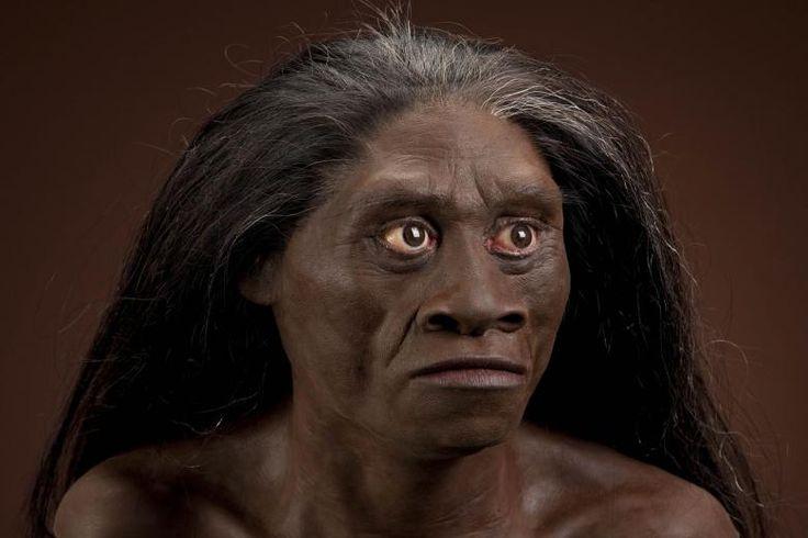 """36. Homo floresiensis. Se le apoda """"el hobbit"""" . Encontraron sus restos en la Isla de las Flores y habitó hasta hace 12000 años. Pesaba 25k y media 1m de estatura. Su capacidad cerebral era de 400cc. Es antecesor del humano moderno """"homo sapiens"""". Vivía en un lugar frondoso, húmedo y lleno de animales exóticos. Este primitivo ya usaba el fuego para cocinar y también herramientas de piedra. Tenía lenguaje propio y capacitado para coordinar."""