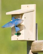 Here's a nice selection of free plans for simple wooden bird houses.