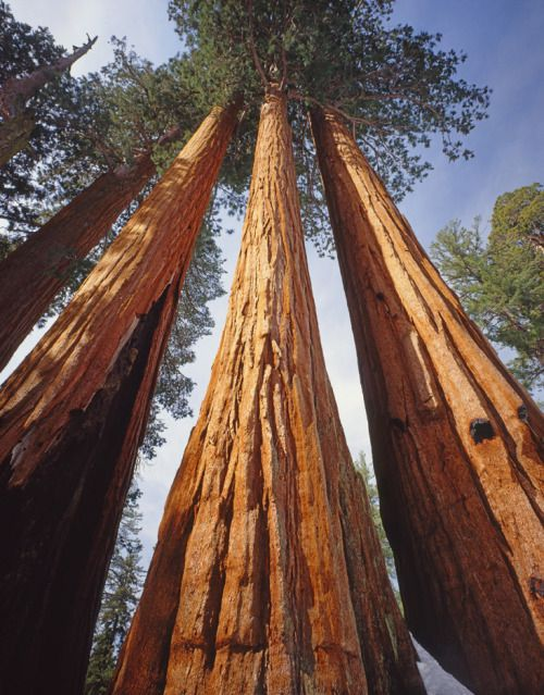 Happy 125th birthday, Sequoia National Park! The nation's second national park was created on September 25, 1890. Established to protect some of the few remaining Giant Sequoia groves, these towering trees are the largest living organisms on Earth by...