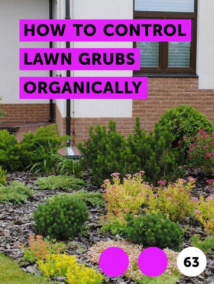 Vegetable Garden Hacks Backyardgardenoasis Plants Organic Gardening Pest Control Cactus Plants